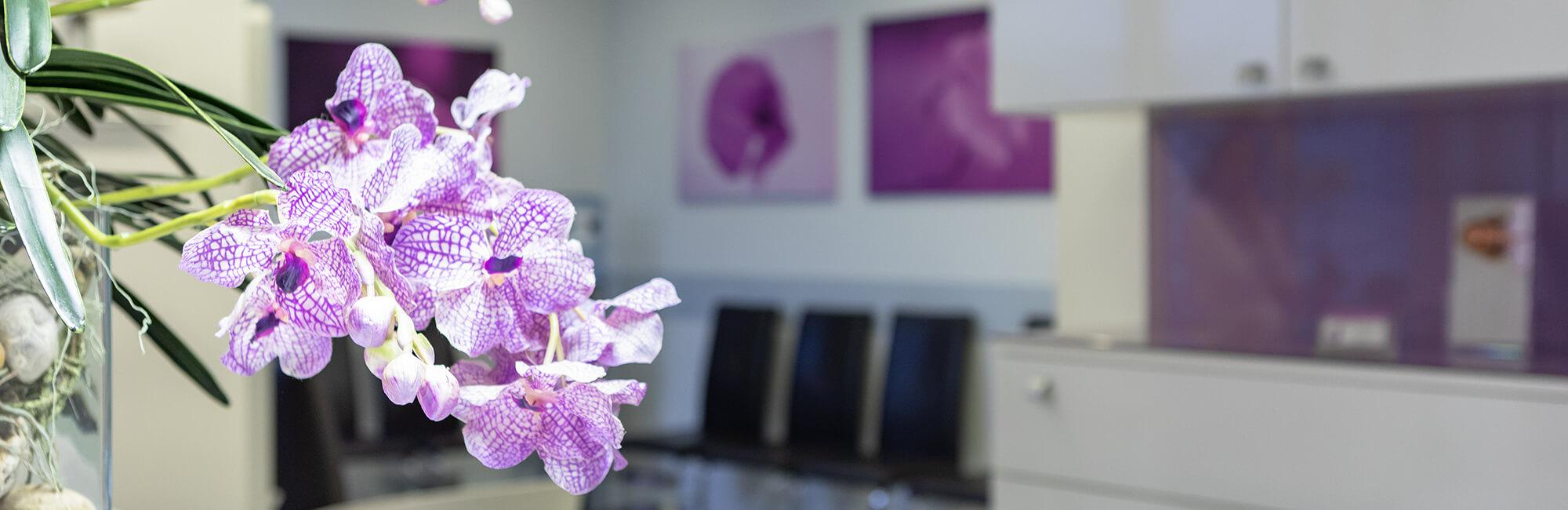 Zahnarzt Klosterneuburg - Dr. Sandra Dusek - Slider Datenschutzerklärung Orchidee Wartezimmer